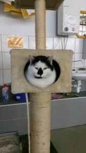 Katze16